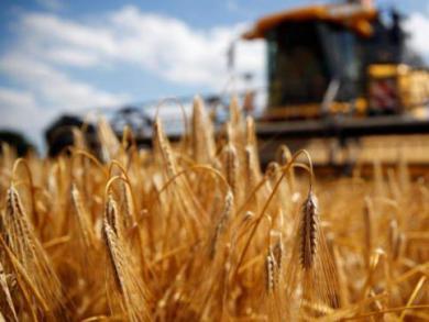 徐长文:澳大利亚大麦出口价降至3年来最低水平